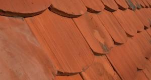 Vos toitures, façades et terrasses sont-elles protégées de la mousse ?