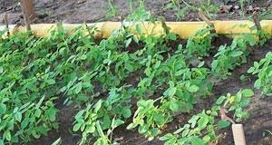 Faire pousser vos plants ou visiter une pépinière?
