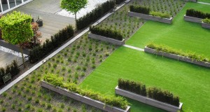 Une toiture végétale, à quoi ça sert ?
