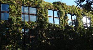 Comment créer un mur végétal d'extérieur ?