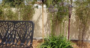 Solutions pour entretenir les agapanthes et stimuler leur floraison
