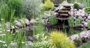 Accessoiriser son bassin de jardin: les éléments incontournables