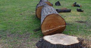 Pourquoi et comment abattre un arbre ?
