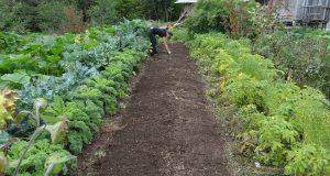 Comment contrôler les plantes de son potager ?