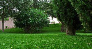Comprendre la pelouse synthétique